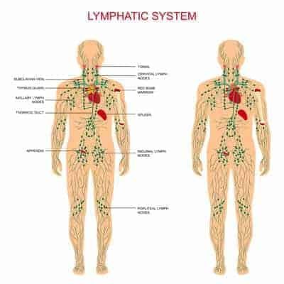 detox the lymphatic system